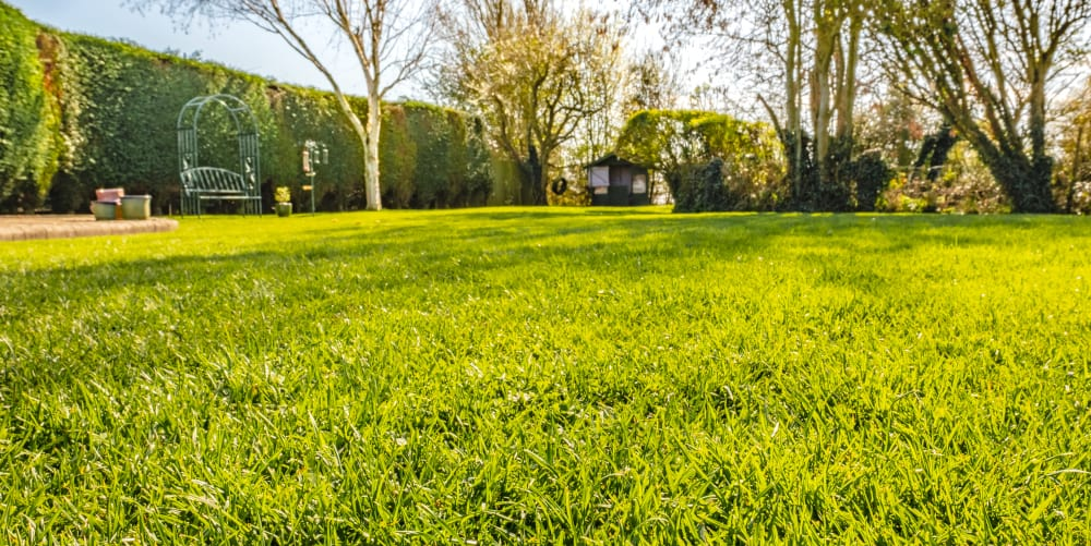 grass edgers for small and large lawns