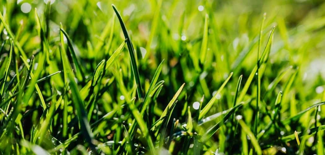 best lawn care products for spring